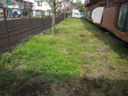 雑草の防止施工前